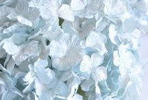 soft blue / The many shades of light blue ... wedgewood, periwinkle, French blue ...