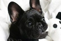 Frenchies / by Amanda