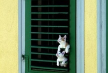 Windows with Cats / by Nancy Shogren