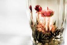 :: plant love ::