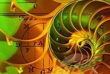 Sacred Spirals / It's all about the sacred spirals in nature, art and more.