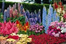 Flowers, plants and trees. / Flores, plantas y árboles. / The magic of flowers. / Todo el encanto de las flores.