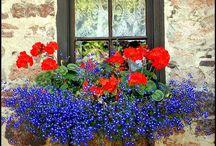 Flores en ventanas, balcones y fachadas
