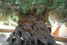Árboles inusuales
