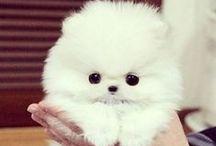 My pets - Coco