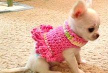 y love chihuahua