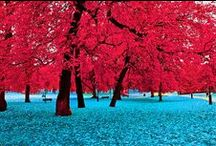 Aquas * Reds / *Please feel free to pin any and all that you want* / by Joyce