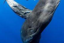 Whales & sea life