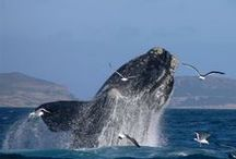 Holidays South Africa / A taste of the magnificent holiday options in South Africa