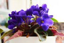 Çiçeklerin Dünyası / Çiçekler hakkında bakım, bilgi yada öylesine güzellik dolu fotoğraflar.