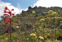 Flower Season South Africa / Celebrating Springtime's blaze of flowers