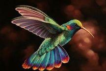 Cool birdies & Colourful creatures