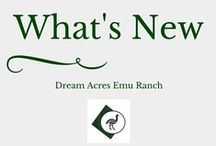 What's New at Dream Acres Emu Ranch / There is always something fun and exciting happening on the ranch.  Visit this board so see what is new or funny with those Crazy Birds!