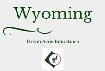 Beautiful Wyoming / The best examples of why we live in Wyoming