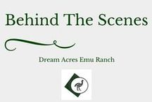 Behind the Scenes / Want to know the good, bad and the ugly side of Emu Ranching?  This is the place to find out!