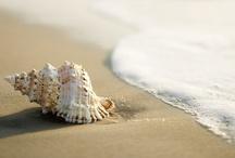 Playas, olas y caracolas - beach, waves, conch ...