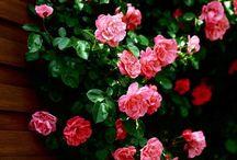 Flowers <3 / Pretty Pretty Flowers :3 <3