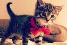 Cats n Kittens