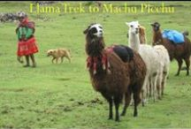 Llama Trek to Machu Picchu / This trek with llamas winds through the picturesque Lares Valley. It gives you a chance to interact with local people and see how little their lives have changed over the last 500 years.