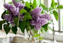 """Lilac Cottage / """"And now that lilacs are in bloom...She has a bowl of lilacs in her room."""" ~T.S. Eliot"""