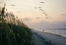 Along a Quiet Shore