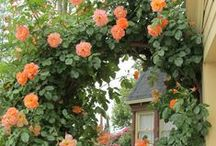 Cottage in Apricot Grove / Peachy-apricot...Mom's favorite colors, fruits, and roses...