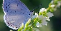 """Cottage in Blue Butterfly Meadow / """"It is blue butterfly day here in spring..."""" ~Robert Frost"""