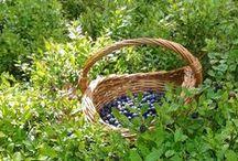 Blueberry Ridge Farm