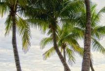 Palm Island Bungalow
