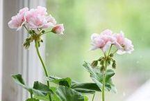 Pink Geranium Farmhouse