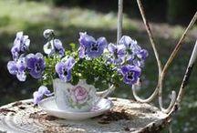 Pansy Tea Cottage / Tea amongst the pansies and violas...