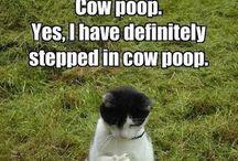 Lol too funny / by Tasha Mason