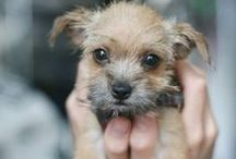 We Love Puppies! / Pictures of cute puppies, how can you resist them?