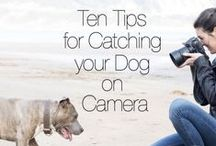 Dog Photography Tips & Tricks / Photographing dogs, tips and ideas