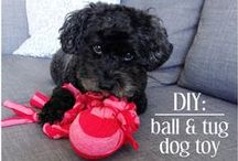 Dog Toys / Toys for your pups.