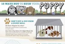 Dog Training / Training and tips for your dogs and puppies.
