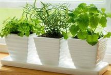 ✿ Green Thumb ✿ / Green Living/Gardening Tips/Enjoying nature..home and plants I want to have a house full of plants. Need to learn how to take care of them. Also to be inspired by pretty houseplants, planters, pots, decorating, etc.