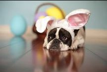 Happy Easter Dogs / Cute dogs celebrating Easter, Easter treats for dogs - Happy Easter dog lovers!