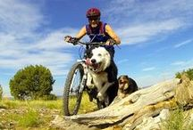 Dogs & Exercise / The many different ways you can exercise with you dogs; mountain biking, swimming, yoga, walking. Taking inspiration from dogs doing exercise.