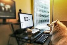 Blogging Tips / Tips for Pet Bloggers and Dog Bloggers