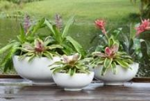 New Trends in Garden Containers / Pottery from our newest catalogs