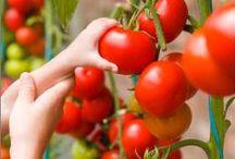 Homegrown / Fruit & veggie gardening