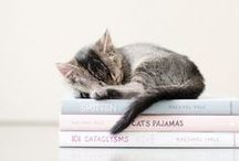 All things Feline / Cats