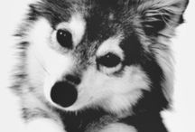 Cute animals :3 / Cute and fluffy animals like foxes and wolfs :3