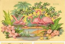 Love FLAMINGOS / A collection of beautiful and fun flamingos / by Pink Flamingo