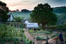 Horticultura e Jardinagem / Hortas e Jardins