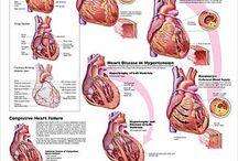 Hjerte - Lunger