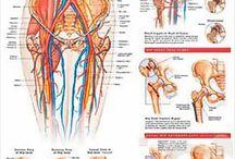 Ortopædkirurgisk - Dermatologi