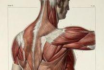 Anatomy resource / Anatomy resource
