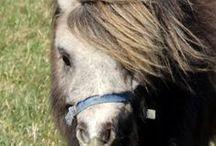 Pony / O, wat hou ik veel van pony's en paarden! Heerlijk eigenwijze dieren. Maar het leukste is nog wel om de manen of staart van je paard of pony in te vlechten op de leukste manier!